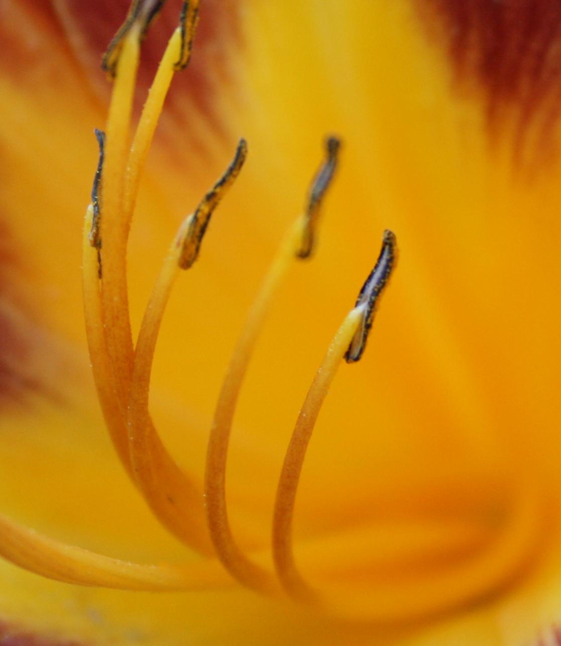 Blumenstempel